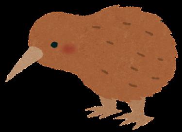 鳥のキーウィ